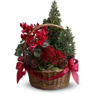 Plant Basket (Gift a plant)